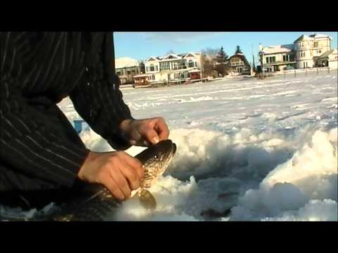Ice Fishing Porn Videos  Pornhubcom