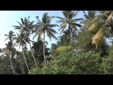 Backwaters Of Kerala  Xxx  A Journey Encompassing Tranquillity, Romance And Adventure video