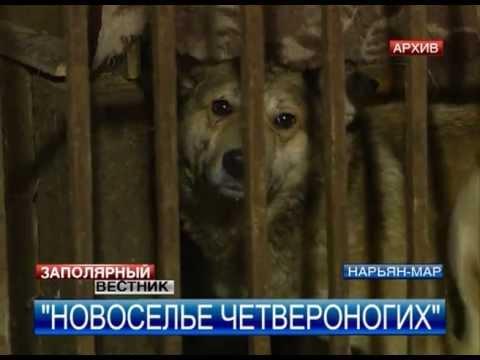 Год дома собакам из приютов дали шанс