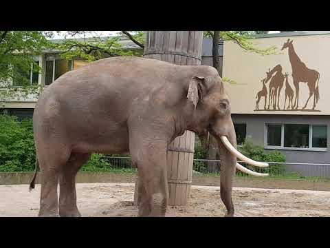 Elefant, elephant, zoo, djurpark, فيل, حديقة الحيوانات