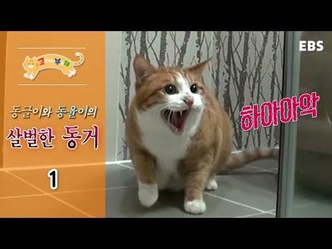 고양이를 부탁해 - 동글이와 동율이의 살벌한 동거_#001