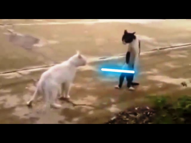 [STAR WARS CAT DUEL! (Star Wars Parody...)] Video