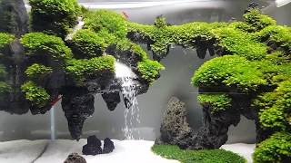 Hồ thác cát bay sau 1 tháng. My underwater waterfall tank after one month.