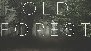 Download Lagu Old Forest | Beautiful Chillstep Mix Gratis STAFABAND