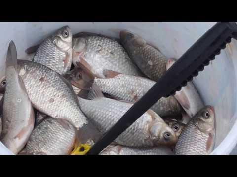 Зимняя рыбалка на карася.Февраль 2017 год. Теплодар.