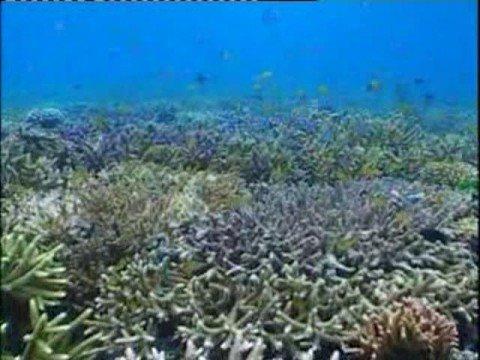 Sabah Diving Malaysian Borneo