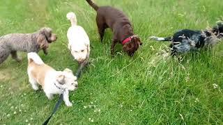 Dog Walker Brentwood