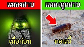 10 เรื่องเทพๆของแมลงสาบ ที่มนุษย์ยังต้องอาย (กินข้าวอร่อยเลยย!!)