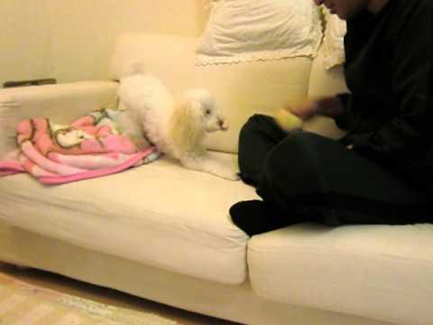 おもちゃのマカロンが大好き☆ (投稿者 : こはく さん)