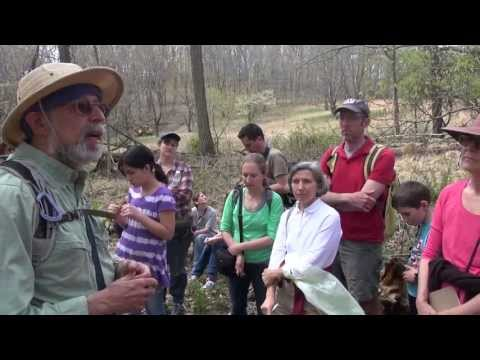 Return to Nature - Foraging with Wildman Steve Brill