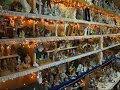 Vermont Woman Collects 1,400 Nativity Scenes