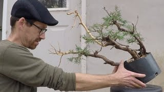 Bonsai: Collected Material Update: Fall 2016