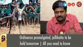 Ordinance promulgated, jallikattu to be held tomorrow | All you need to know