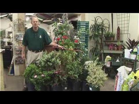 Beginners Vegetable Gardening How To Garden In Pots On Your Deck Youtube