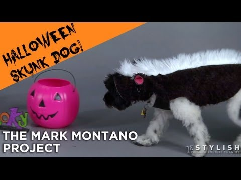 HALLOWEEN DOG COSTUME: SKUNK DOG
