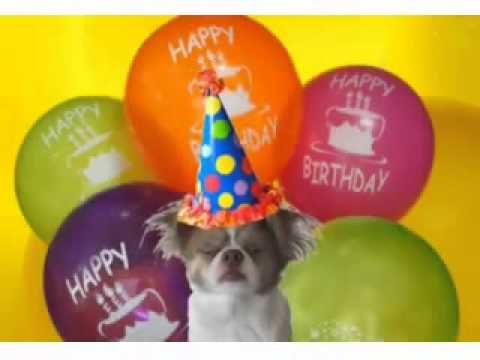 Funny Birthday Song (frazi - It's Your Birthday Song, For Kids) video