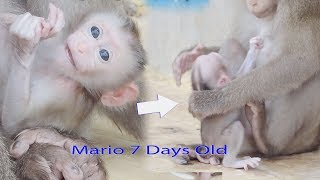 Million Tear Drop Down To See Terrible Mistreat Baby Mario 7 Days Old By Mama Mary