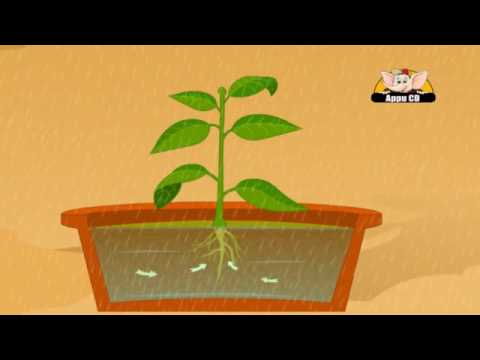 Learn About Plants - Photosynthesis