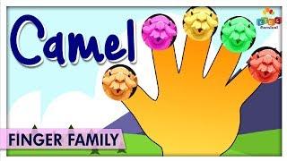 Camel Finger Family   Popular 3D nursery rhymes For kids   Kids Carnival
