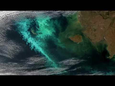 Large, persistent phytoplankton bloom in the Bering Sea in 2014