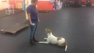 Trick Training | Solid K9 Training Dog Training