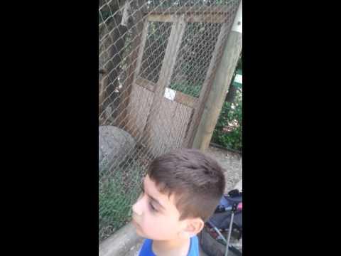 Arab family in israeli zoo