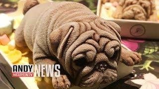 Kem hình con chó con bán ở Đài Loan - bạn cảm thấy như thế nào ??【A581】HD