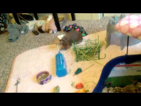 What is in my guinea pigs cage and products