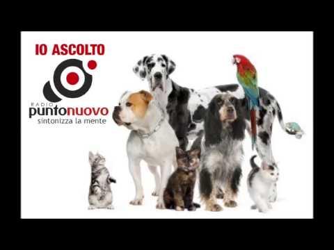 QUANTI SONO GLI ANIMALI DOMESTICI IN ITALIA