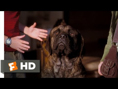 Hotel For Dogs (5/10) Movie CLIP - All That For A Look Out The Window? (2009) HD