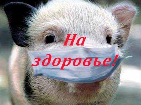 ЕС решил оштрафовать Россию за отказ от европейской свинины