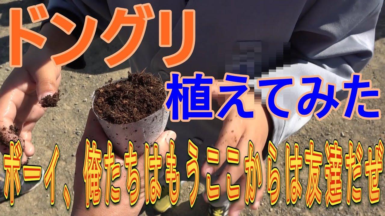 ウバメガシの画像 p1_18