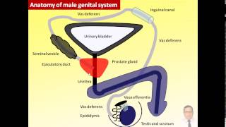 Magdy Said Anatomy Series,General Embryology,1- Introduction