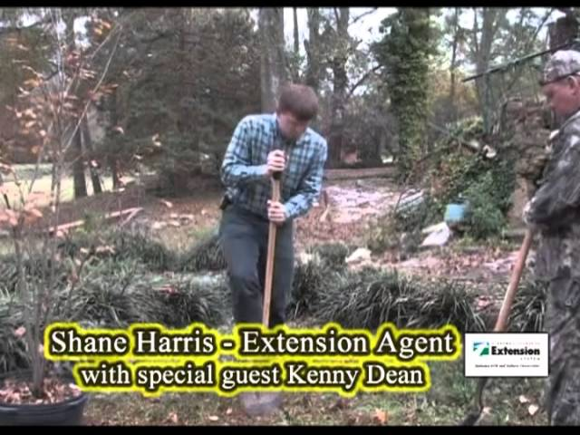 Planting A Small Tree - Crapemyrtle