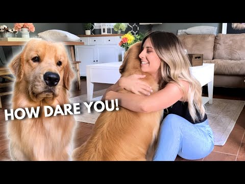 Hugging Another Dog Too Long | Jealous Dog Reaction