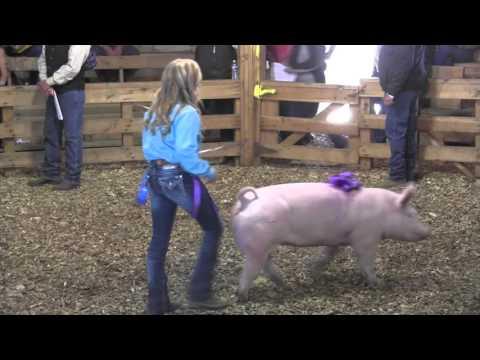 Lake County Fair livestock auction 9-05-2015