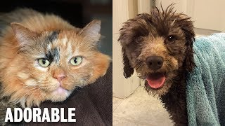 THIS CAT AND DOG GIVES ME FAITH IN HUMANITY