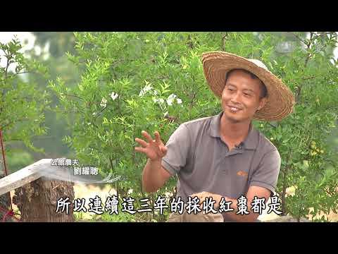 【農夫與他的田】20181026 - 棗路回家
