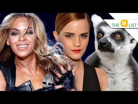 4 Animal Societies Run by Strong Females