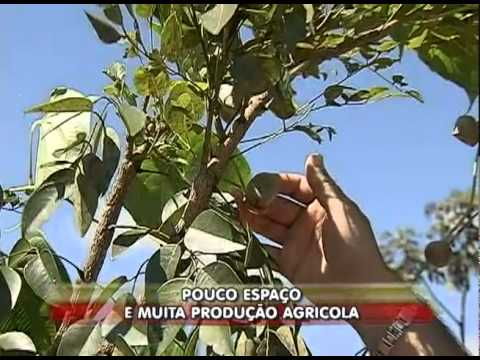 Pequenos agricultores lucram com produtos de qualidade