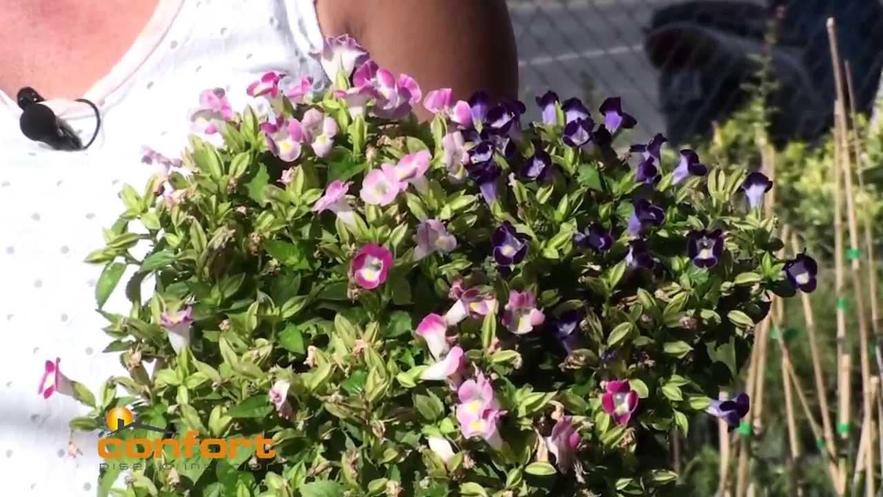 Vivero alegr a plantas de sol youtube - Plantas de jardin fotos ...