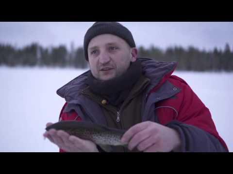 рыбалка в швеции гольца