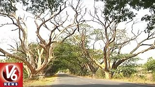 Special Report | People Face Problems With Dried Out Trees On Warangal National Highway 163
