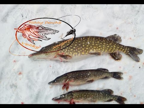 рыбалка на веряжке