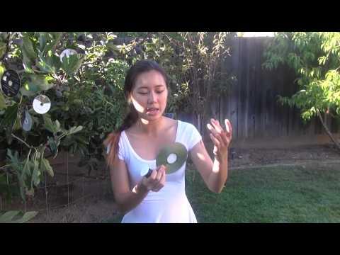 use Old CDs in gardening bird control