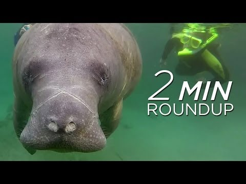 Shark slaughter, manatees & the Lord of the Dance | Nature News Roundup 01-31-2014