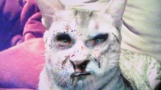 ZOMBIE CAT!