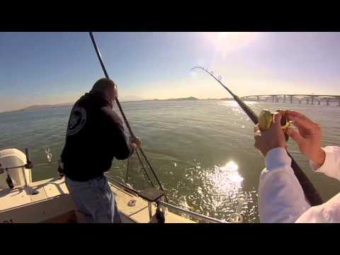 CA Delta Sturgeon Fishing 11/29/13