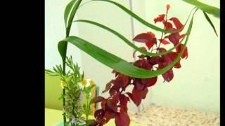 Ikebana, arte floral japonés.