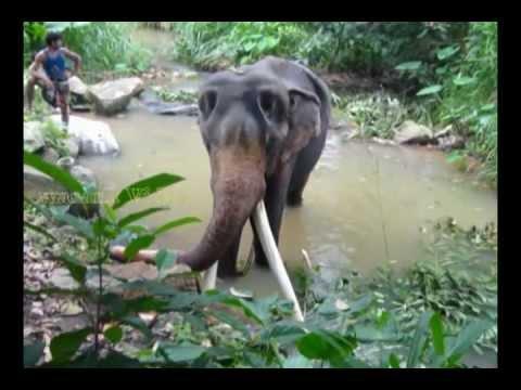 Pinnawala Elephant Orphanage in Sri Lanka, Sri Lanka.